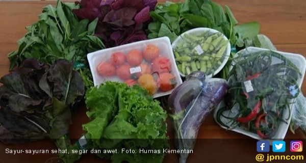 Penderita Asam Urat Pantang Konsumsi Sayuran Hijau Jpnn Com