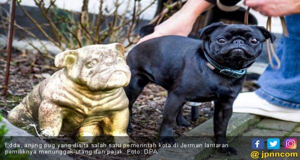 Viral Anjing Lucu Ini Disita Pemerintah Karena Pemiliknya Tak Bayar Utang Jpnn Com