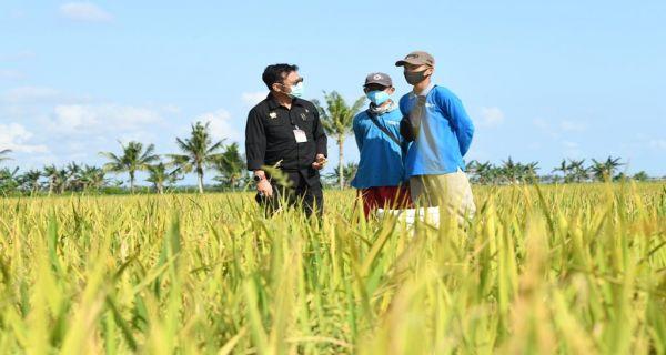 Kementan Dorong Sertifikasi Calon Asn Pppk Penyuluh Pertanian Jpnn Com